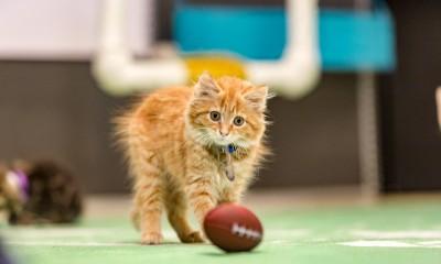 kitten bowl III howie long hair plays 2016