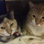 meet caraway & zaatar nsalas latest double adoptable pets 2016 images cats