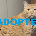 Meet Moe NSALA's latest adoptable pet cat ready for a home