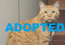 meet moe nsalas latest adoptable pet cat 2016 images adopted
