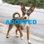 UPDATE:Meet Tuesday, NSALA's Latest Pet (Dog) that was Adopted