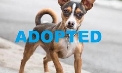 meet tuesday nsalas latest adoptable pet 2016 mttg ADOPTED