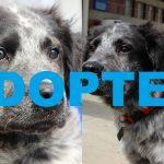 espresso bean adoptable dog rescue 2016 imag ADOPTED