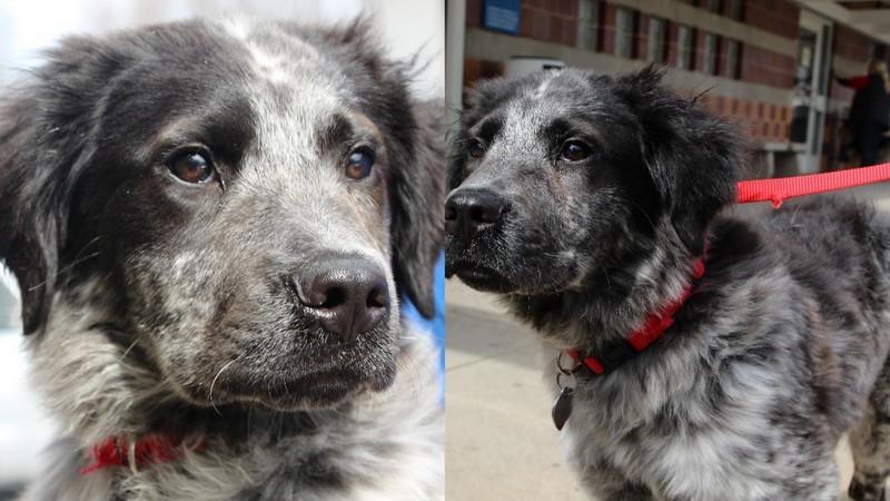 espresso bean adoptable dog rescue 2016 images