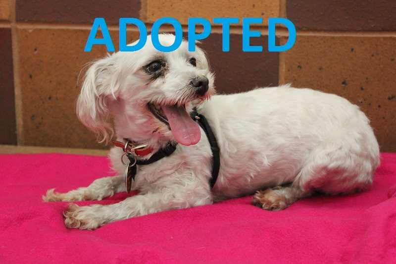 meet ava nsalas latest adoptable pet dog looking for a great home 2016 images mttg