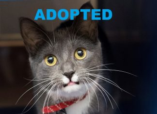 meet cheddar nsalas latest adoptbale pet cat 2016 images adopted
