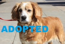 Meet Ashling NSALA's latest adoptable dog ready for a great home 2016 images