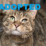 ADOPTED: Meet Brie NSALA's latest adoptable cat