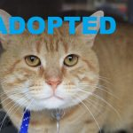 ADOPTED: Meet Captain Teddy NSALA's latest adoptable pet cat