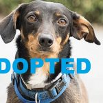 ADOPTED: Meet Cooper NSALA's latest adoptable pet dog