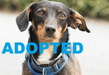 Meet Cooper NSALA's latest adoptable pet dog ready for a great home 2016 images
