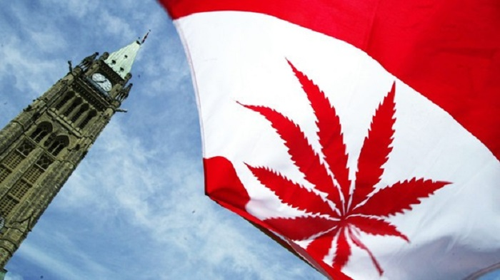 canada legalizing pot 2016 images