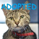 Serenity has been adopted into a great new home!