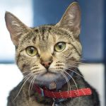 meet serenity nsalas latest adoptable pet 2016 mttg images cropped