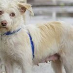 Meet Cassidy NSALA's latest adoptable dog ready for a great home 2016 crop