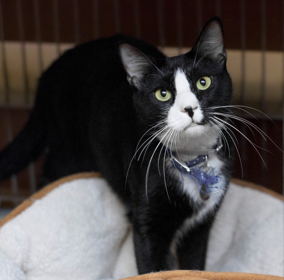 Meet Nosey NSALA's latest adoptable cat ready for a great home 2016 images