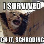 cat in box meme