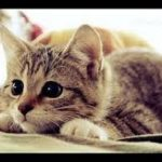 cute kitten pounce