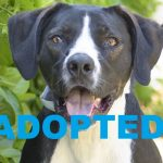 ADOPTED: Meet Jackson NSALA's latest adoptable dog