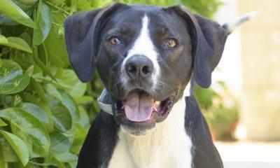 jackson nsala movie tv tech geeks rescue dog