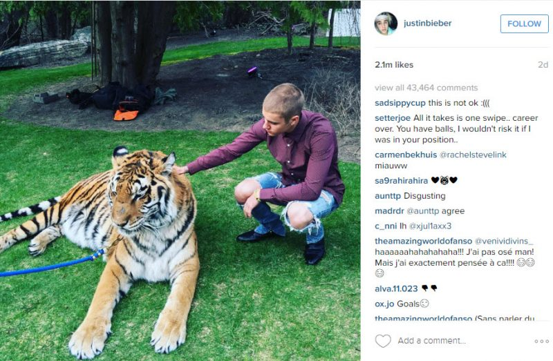 justin bieber tiger time instagram