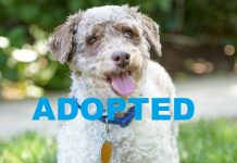 meet spock nsalas latest adoptable dog looking for a great home 2016 images