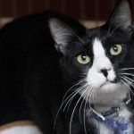 nosey adopt me rescue cats movie tv tech geeks nsala 2016 images