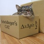 Microsoft and Schrodinger's Cat