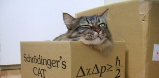 Microsoft and Schrodinger's Cat images 2016