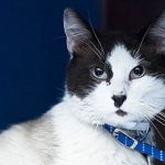 Meet Elliot NSALA's latest adoptable cat ready for a great home 2016 images