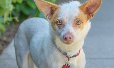 Meet Princess Peach NSALA's latest adoptable dog ready for a great home 2016 images