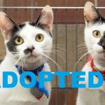ADOPTED: Meet Wonton & Kneidel NSALA's latest adoptable duo