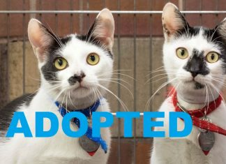 Meet Wonton & Kneidel NSALA's latest adoptable duo ready for a great home 2016 images