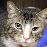 Calypso_MA2529 north shore animal league