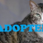Meet Calypso NSALA's latest adoptable cat ready for a great home 2016 images