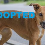 ADOPTED: Meet Dixie NSALA's latest adoptable dog