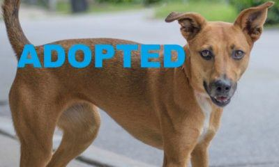 Meet Dixie NSALA's latest adopted dog 2016 images