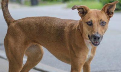 Meet Dixie NSALA's latest adoptable dog ready for a great home 2016 images