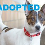 ADOPTED: Meet Rita NSALA's latest adoptable dog