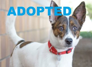Meet Rita NSALA's latest adoptable dog ready for a great home 2016 images