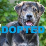 ADOPTED: Meet Tuco NSALA's latest adoptable dog