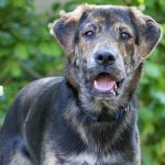 Meet Tuco NSALA's latest adoptable dog ready for a great home 2016 images