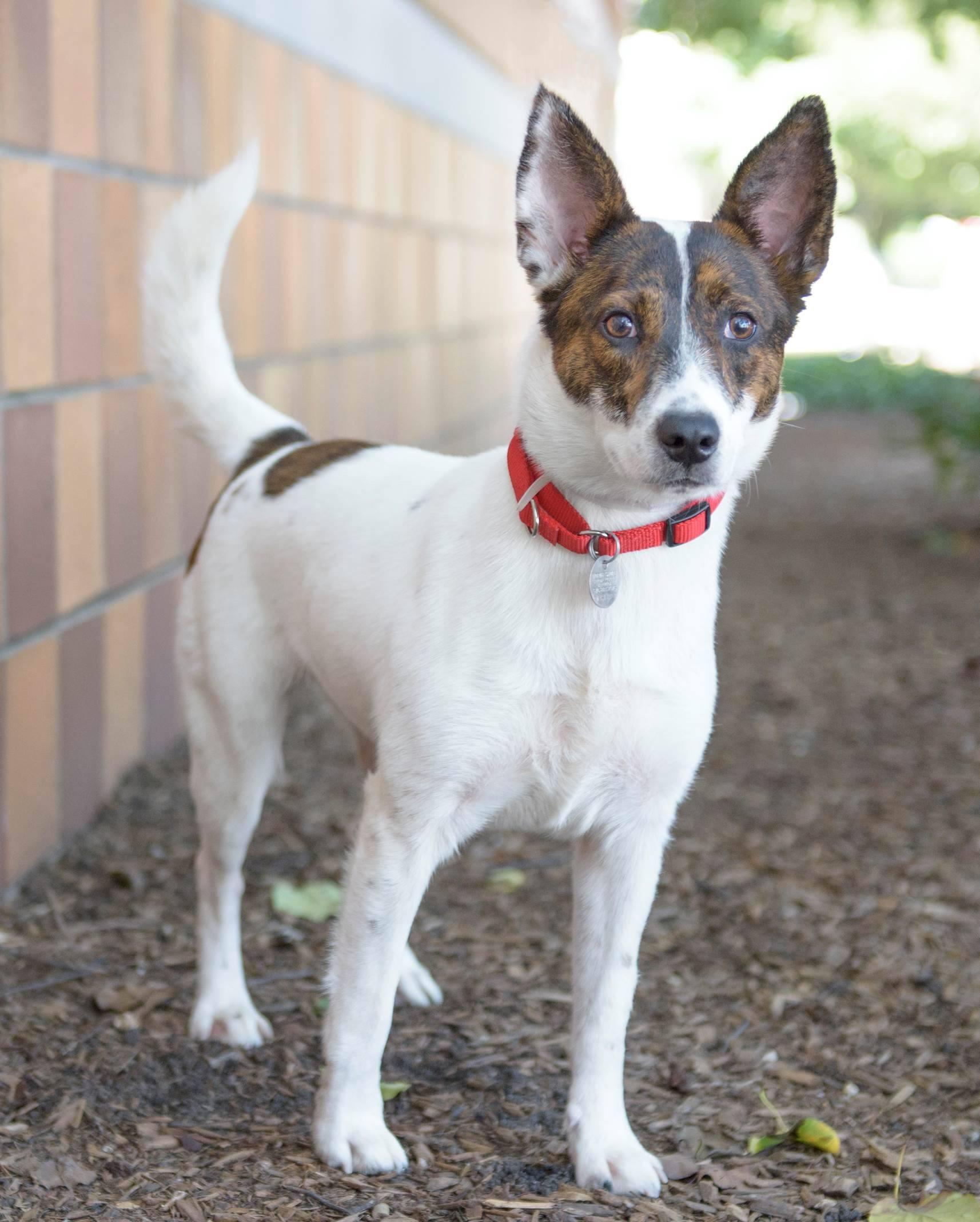 adopt me pets Rita - R161823