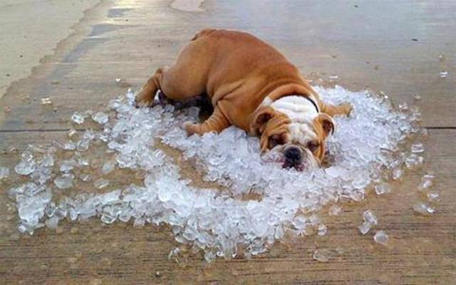 keeping your pets safe on those hot summer days 2016 images