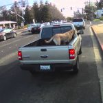 dog riding in back of truck