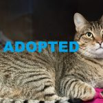 ADOPTED: Meet Buck NSALA's latest adoptable cat ready for a great home