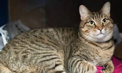 meet buck nsalas latest adoptable cat ready for a great home 2016 imagesmeet buck nsalas latest adoptable cat ready for a great home 2016 images