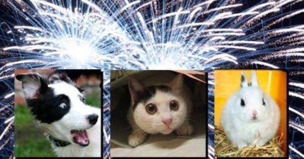pets near fireworks