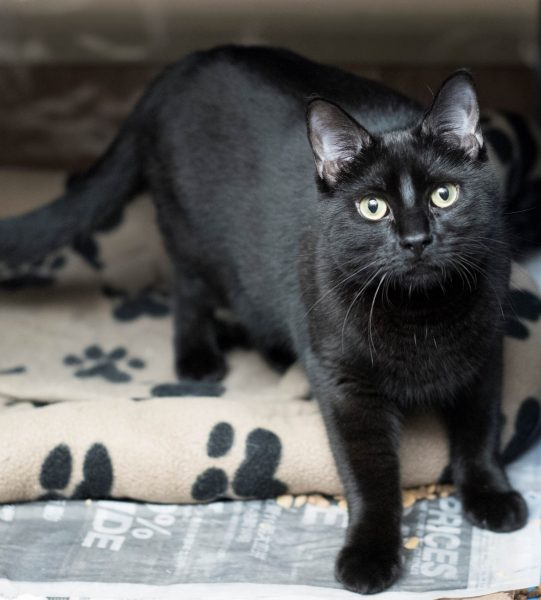pom pom adopt me rescue cat movie tv tech geeks