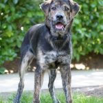 tuco adopt me rescue dogs